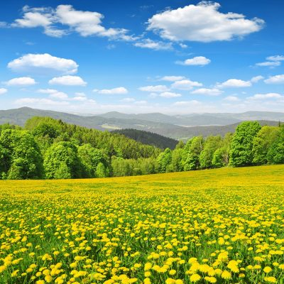 Spring landscape in Šumava National Park - Czech Republic