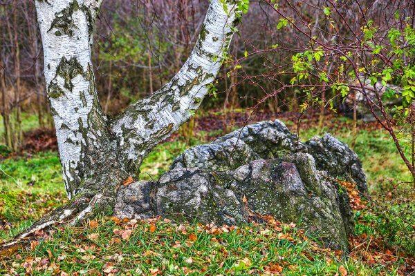 Nature in Divoka Sarka Park, Prague, Czechia